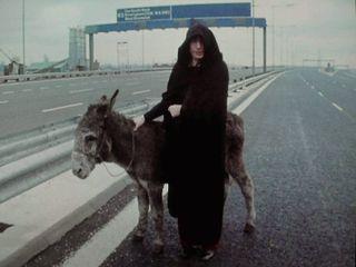 Charlie-donkey 2